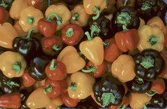 mg.Pepper_Miniature_Bell_Peppers.jpg