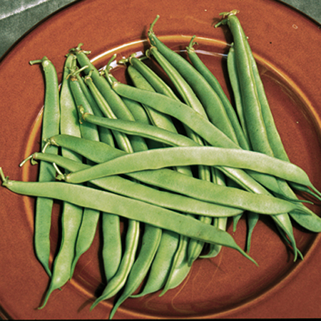 Heirloom Bean 'Bountiful Stringless' Snap Bush Bean