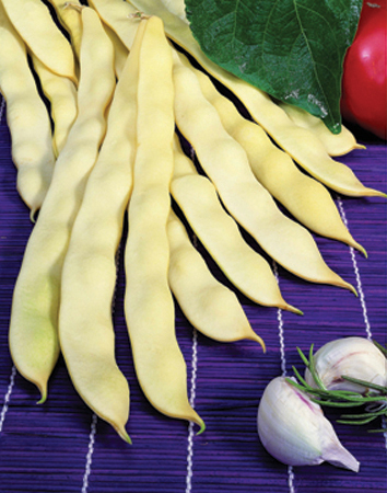 Heirloom Bean 'Marvel of Venice' Romano Snap Pole Bean