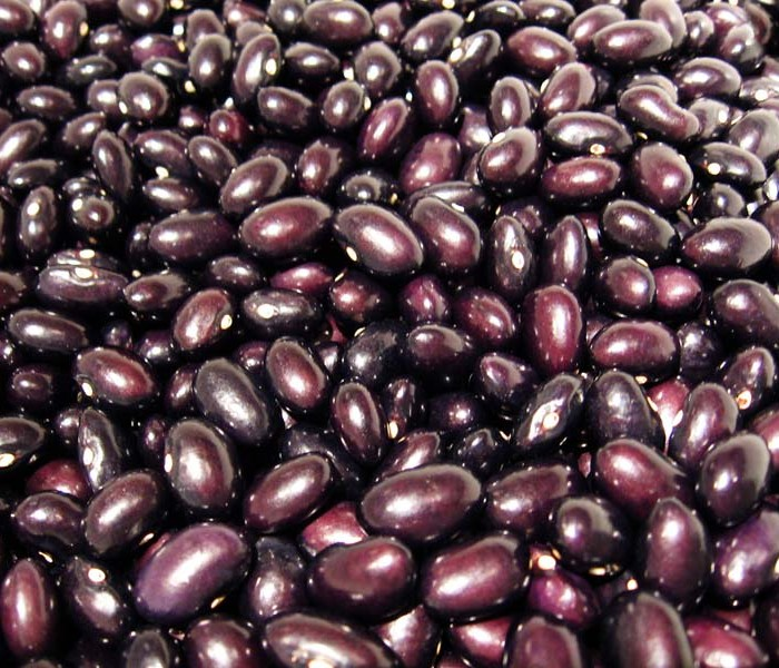 Heirloom Bean 'Black Basque' Dry Bush Bean