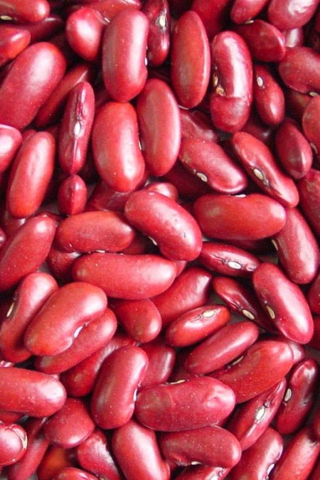 Heirloom Bean 'Red Kidney' Fresh/Dry Shell Bean