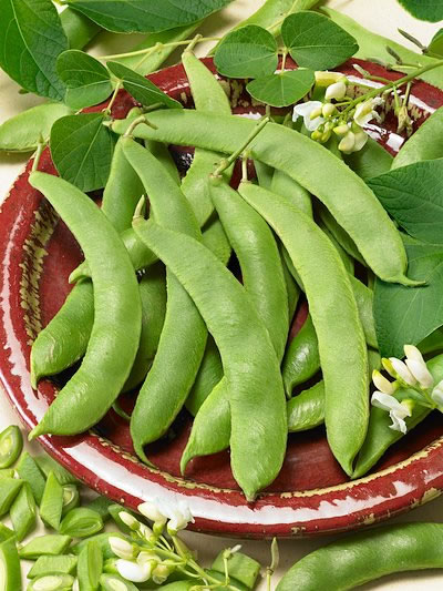 Heirloom Bean 'Scarlet' Runner Snap/Shell Pole Bean