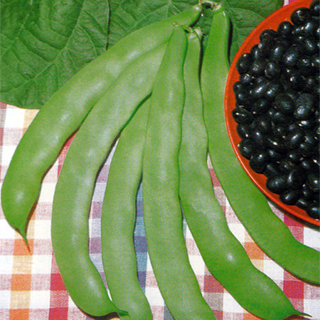 Heirloom Bean 'Supermarconi' Romano Snap Pole Bean
