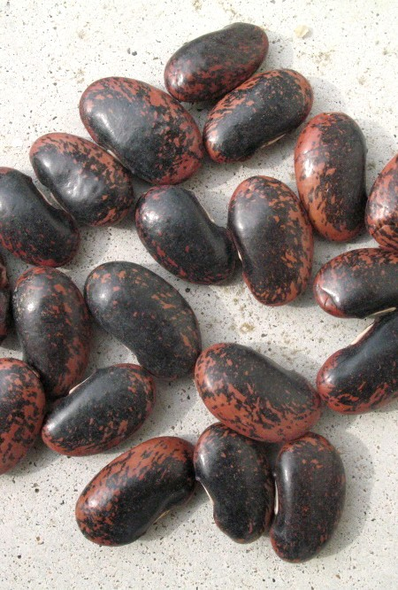 Heirloom Bean 'Sunset' Runner Snap/Shell Pole Bean