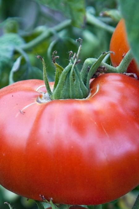 Tomato 'Carmello'