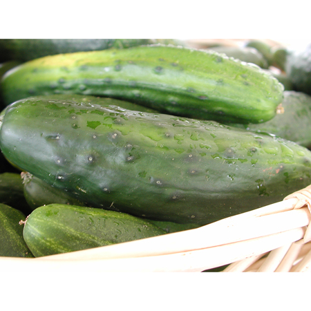 Cucumber 'Homemade Pickles' Pickling