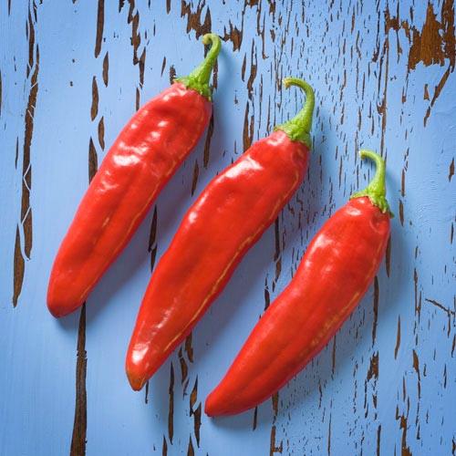 Pepper (Hot) 'Numex Joe E. Parker' Anaheim