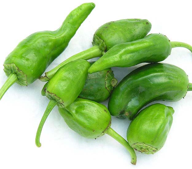 Pepper (Hot) 'Padron'