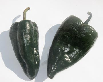 Pepper (Hot) 'Poblano'