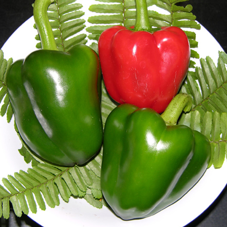 Heirloom Pepper (Sweet) 'Bullnose' Bell