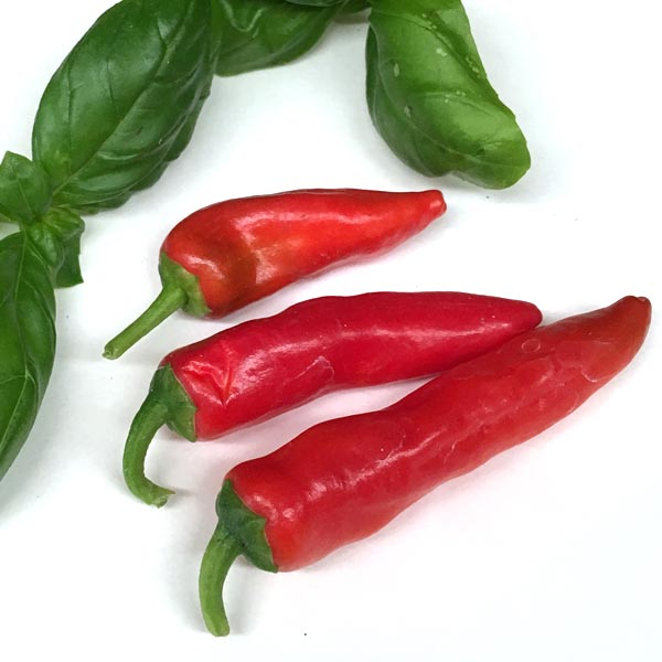Pepper (Hot) 'Cayennetta'