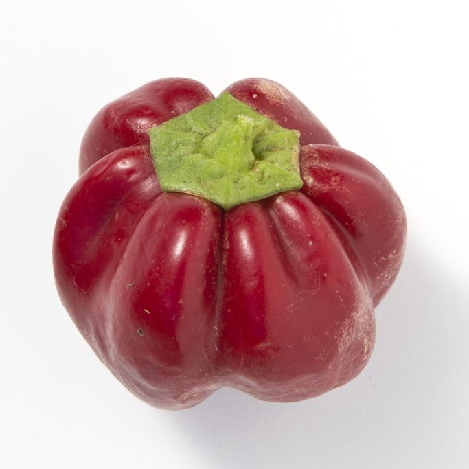 Heirloom Pepper (Sweet) 'Ruby King' Bell