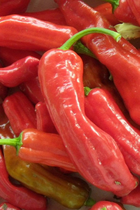 Heirloom Pepper (Sweet) 'Corno di Toro Red'