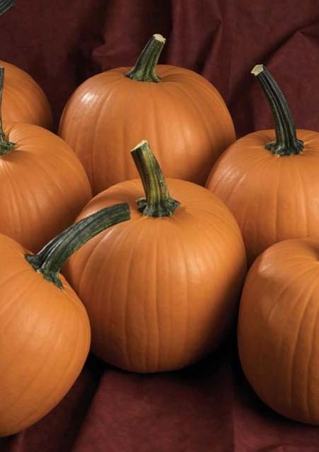 Pumpkin 'Hijinks'