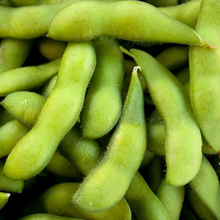 Soybean 'Midori Giant' Edamame