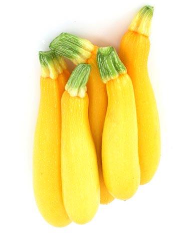 Squash (Summer) 'Goldy' Zucchini