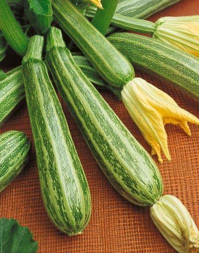 Squash (Summer) 'Safari' Zucchini