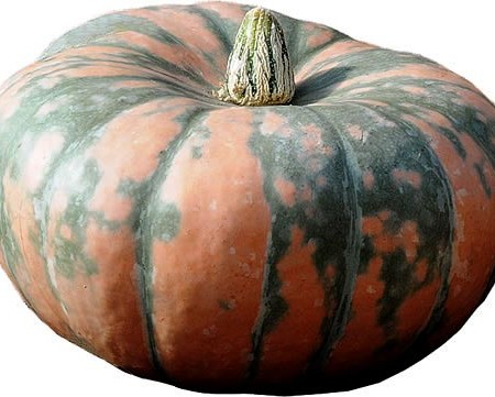 Squash (Winter) 'Speckled Hound' Kabocha