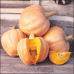 Heirloom Squash 'Amish Pie' Pumpkin
