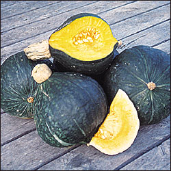 Heirloom Squash 'Anna Swartz' Hubbard