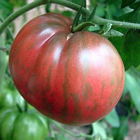 Tomato - Wild Boar Farms Hybrid 'Berkeley Tie Dye Pink'