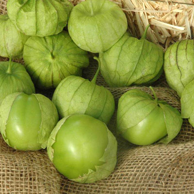 Tomatillo/Ground Cherry 'Tamayo' Tomatillo