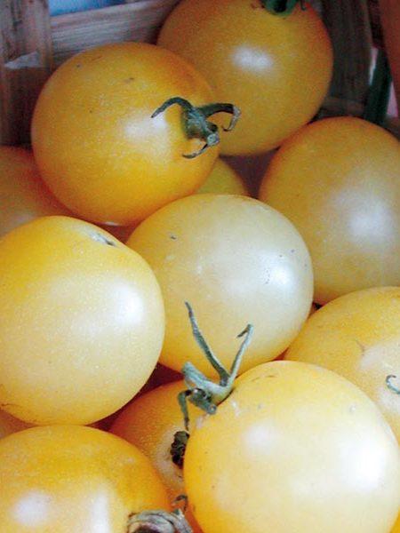 Tomato 'Snow White' Cherry Tomato