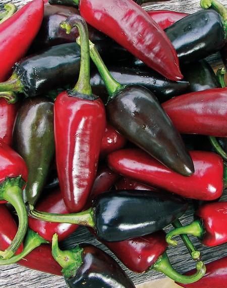 Heirloom Pepper (Hot) 'Black Hungarian'