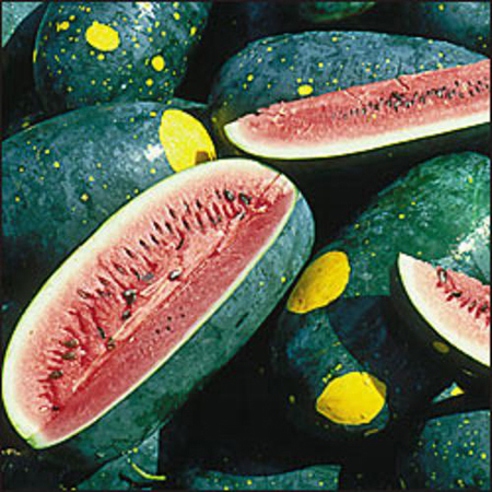 Heirloom Melon 'Moon and Stars Cherokee' Watermelon