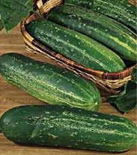 Cucumber 'Straight Eight' Slicing