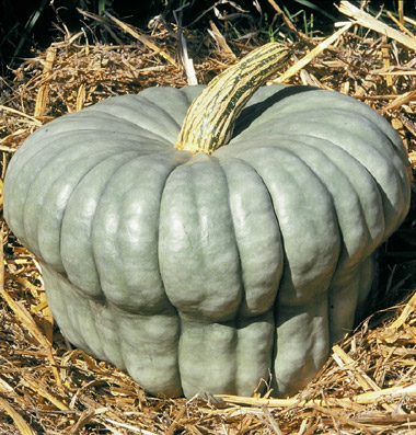 Heirloom Squash 'Queensland Blue' Winter Squash