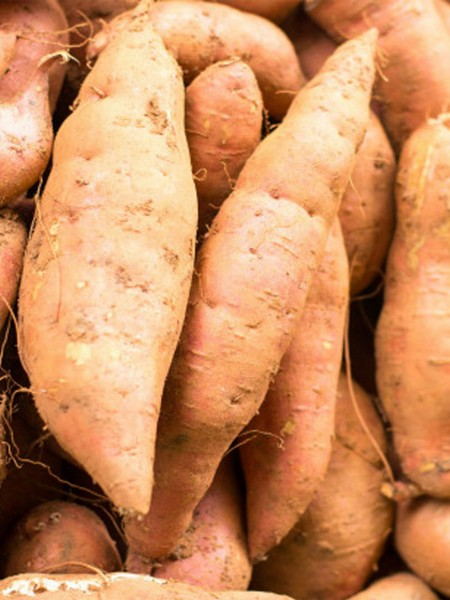 Sweet Potato 'Bunch Porto Rico'