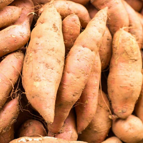 Sweet Potato 'Bunch Porto Rico'