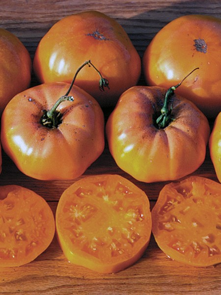 Heirloom Tomato &#039;Dr. Wyche&#039;s Yellow&#039;