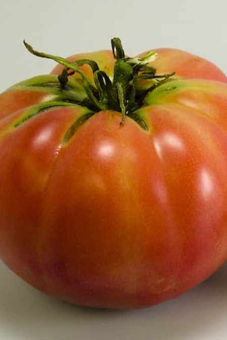 Heirloom Tomato 'Mexico'