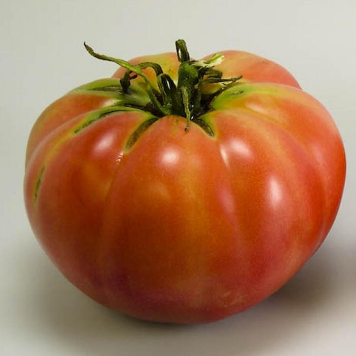 Heirloom Tomato 'Mexico'