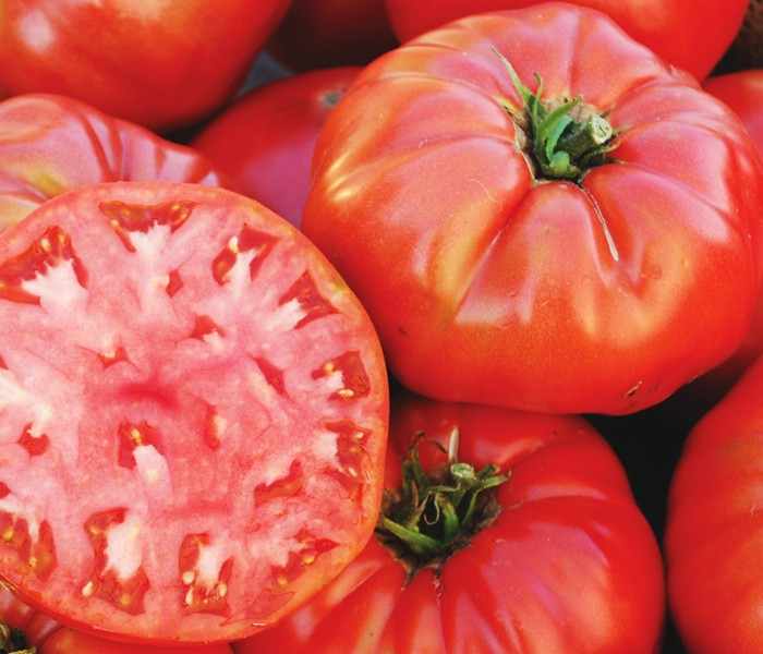 Heirloom Tomato 'Mortgage Lifter Red'