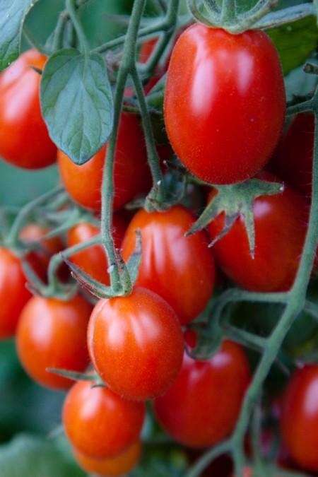 Tomato 'Sweet Hearts' Grape Tomato Mighty 'Mato