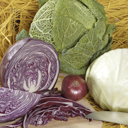 Cabbage 'All Season Mix'