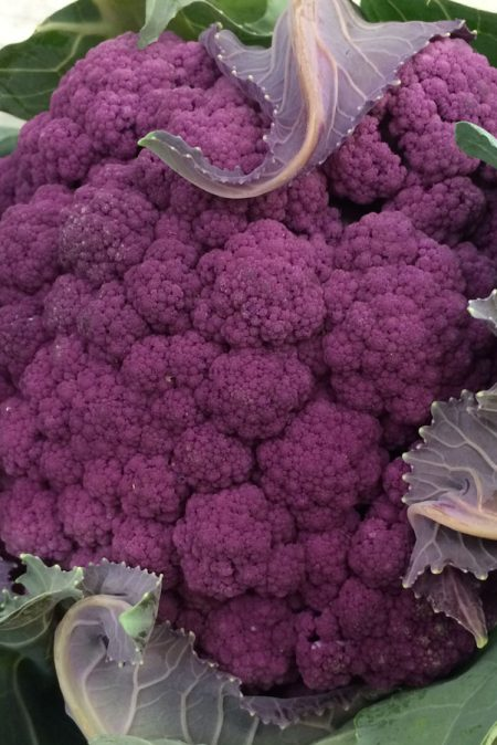 Cauliflower 'Graffiti Purple'