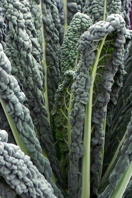 Kale 'Black Magic'