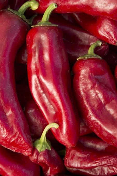 Pepper (Sweet) 'Atris' non-bell