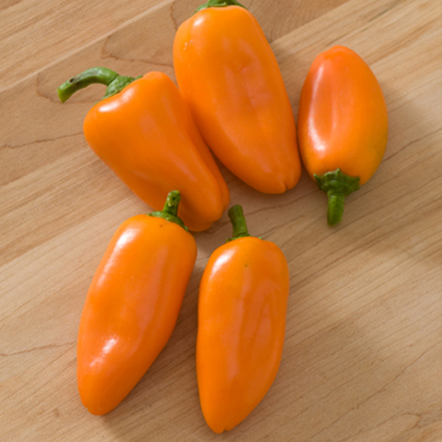 Displaying 20> Images For - Orange Bell Pepper Plant...