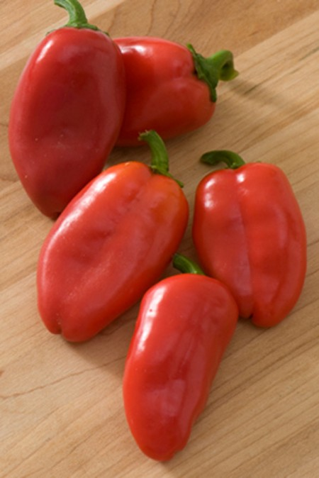 Pepper (Sweet) 'Lunchbox Red Snack' bell