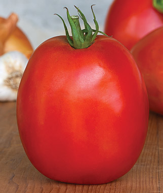 Tomato &#039;SuperSauce&#039; Sauce Tomato