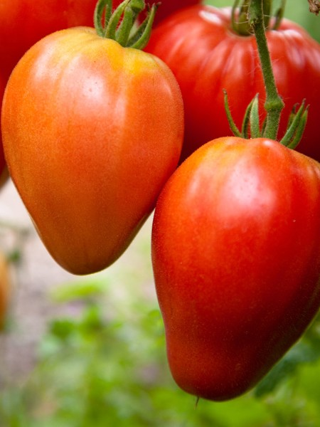 Tomato 'Red Heart'