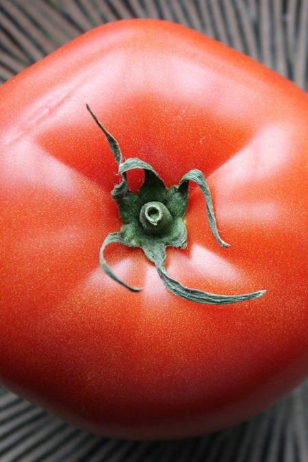 Tomato 'Tasti-Lee'