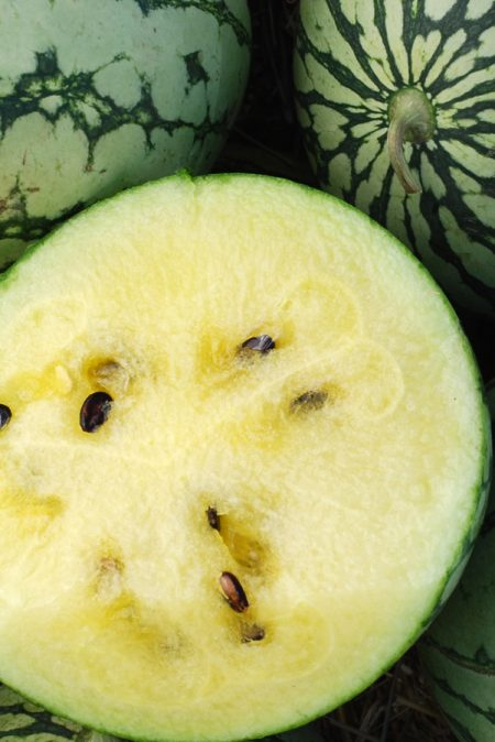 Melon 'Petite Yellow' Watermelon