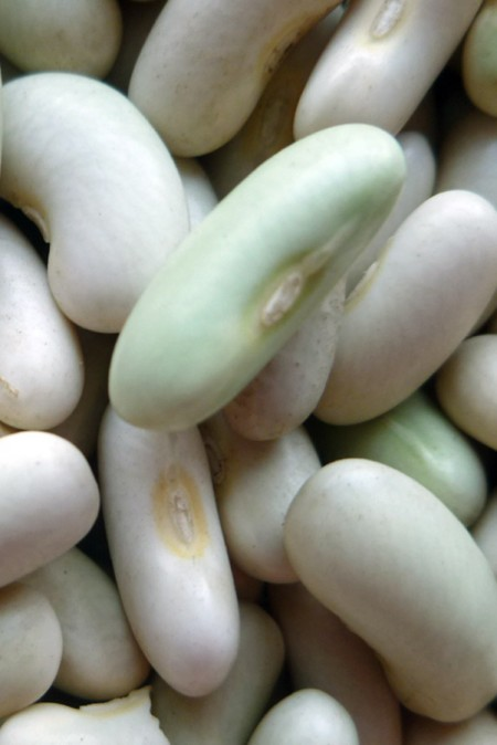 Heirloom Bean 'Flageolet' Fresh/Dry Shell Bean