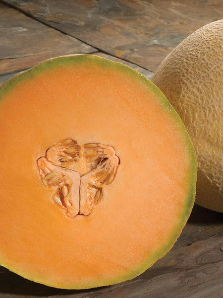 Melon 'Atlantis' Cantaloupe F1
